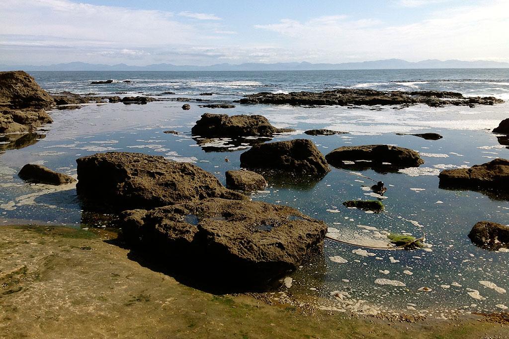 Botanical_Beach42