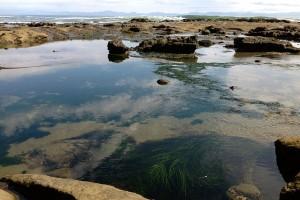 Botanical_Beach41
