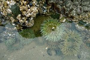 Botanical_Beach60